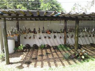 kit para irrigação de orquidário